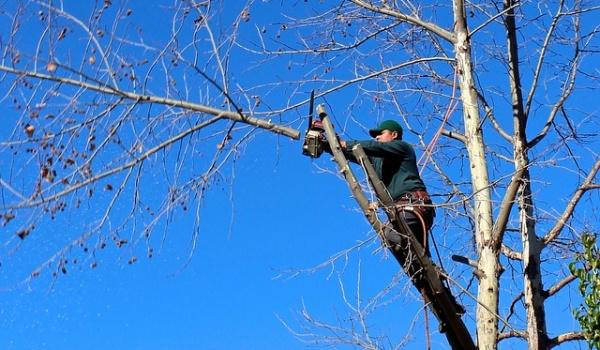 Entretien des arbres à proximité des réseaux téléphoniques